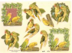 A4 Knipvel TBZ 504796 Vogels/Agaponissen-papegaai