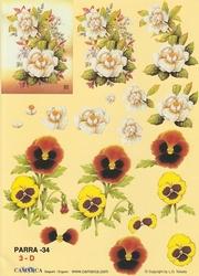 A4 Knipvel Parra 34 Viooltje / rozen