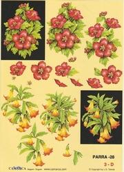 A4 Knipvel Parra 28 Rode bloem en Datura in zwart kader