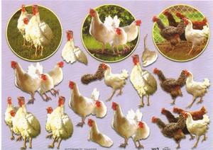 A4 Knipvel TBZ 504383 Dieren/kippen