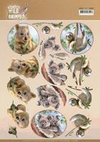 Amy Wild Animals Outback 3D Knipvel CD11485 Koala/luiaard