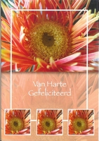 Wenskaart 16 Van Harte Gefeliciteerd  rode bloem