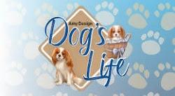- Collectie 2019 Dog's Life & Cat's World